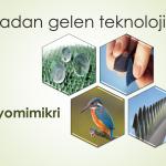 Doğadan gelen teknoloji: Biyomimikri