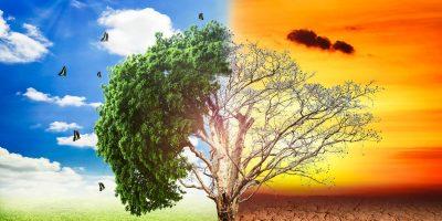 GELECEK NESİLLERE YAŞANABİLİR BİR DÜNYA BIRAKMANIN ANAHTARI: EKOLOJİK OKURYAZARLIK