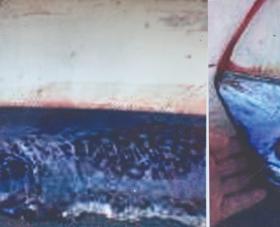KUZEY EGE KIYILARINDAN (ÇANAKKALE, TÜRKİYE) İLK KEZ GÖZLENEN  TEPELİ KAĞIT BALIĞI,  Lophotus lacepede Giorna, 1809 ( Actinopterygii: Lophotidae )