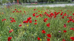 Doğal çiçeklerimiz