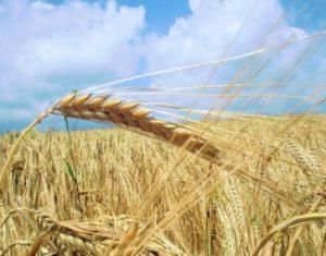 Sağlıklı ekosistemler ve biyolojik çeşitliliğimiz gıdamızın garantisidir