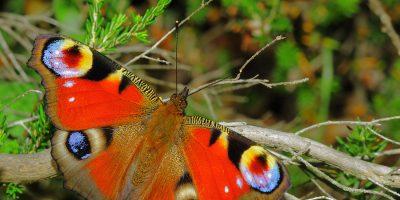 Kelebeklerin ve güvelerin renkli dünyası
