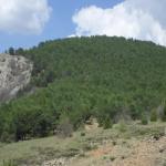 TÜRKİYE'DE, SARIÇAMIN (Pinus sylvestris L.) EN GÜNEY ENLEMLERDE BELİRLENEN YENİ YAYILIŞLARI