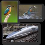Biyomimikri: Hızlı Tren