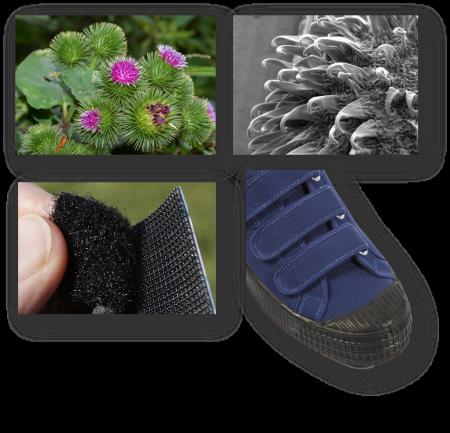 Biyomimikri: Velcro bantları