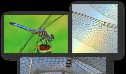 Biyomimikri: Yusufcuk kanadı